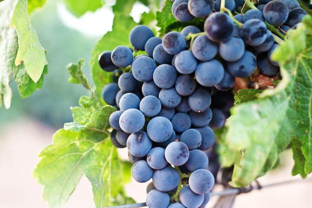 A pesar de la situación actual, la industria vitivinícola argentina aumenta sus exportaciones en un 46,3%